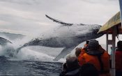 Sydney Excursions – Follow Humpback Whales as They Travel Along the East Coast