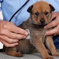 3 Steps For Dog Health Tips