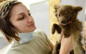 Here Is How A Vet Clinic Is Important For Your Pet's Best Medical Care?