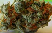 What are some of the benefits of cannabis?